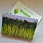 wielkanoc rzeżucha - eco pocztówka